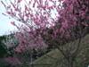 2008_03180038_1